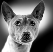 DOG 14 JE0034 01