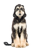 DOG 14 JE0035 01