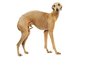 DOG 14 JE0038 01