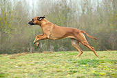 DOG 14 JE0041 01