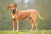 DOG 14 JE0043 01