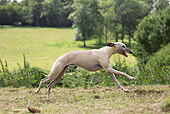 DOG 14 JE0044 01