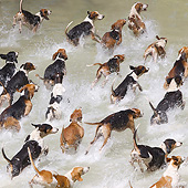 DOG 14 JE0045 01