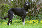 DOG 14 JE0047 01