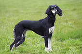 DOG 14 JE0048 01