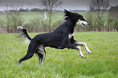 DOG 14 JE0049 01