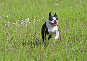 DOG 14 JE0053 01