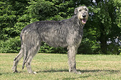DOG 14 JE0056 01