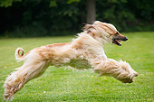 DOG 14 JE0059 01