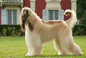 DOG 14 JE0060 01