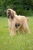 DOG 14 JE0062 01