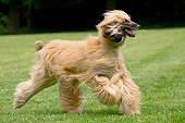 DOG 14 JE0064 01