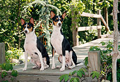 DOG 14 JN0002 01