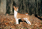 DOG 14 JN0003 01