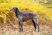 DOG 14 JN0004 01