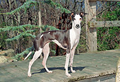DOG 14 JN0006 01