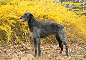 DOG 14 JN0009 01