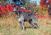 DOG 14 JN0010 01