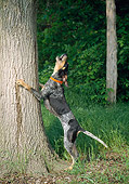 DOG 14 JN0012 01