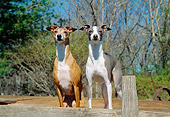 DOG 14 JN0017 01
