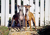 DOG 14 JN0018 01