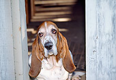 DOG 14 JN0020 01