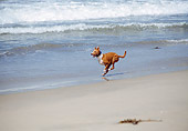 DOG 14 JN0021 01