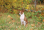 DOG 14 JN0023 01