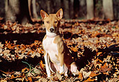 DOG 14 JN0027 01