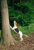 DOG 14 JN0030 01