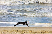 DOG 14 JS0003 01