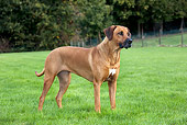 DOG 14 JS0004 01