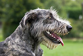 DOG 14 JS0005 01