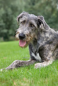 DOG 14 JS0006 01
