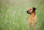 DOG 14 KH0046 01