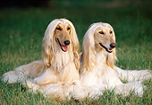 DOG 14 KH0049 01