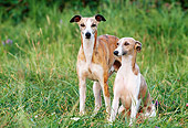 DOG 14 KH0050 01
