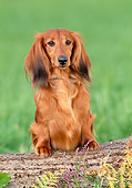 DOG 14 KH0051 01