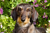 DOG 14 LS0003 01