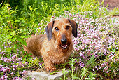 DOG 14 LS0004 01