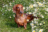 DOG 14 LS0008 01