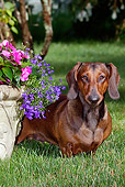 DOG 14 LS0009 01