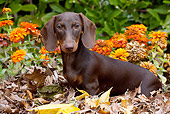 DOG 14 LS0010 01