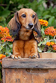 DOG 14 LS0011 01