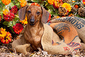 DOG 14 LS0013 01