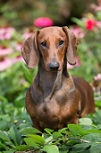 DOG 14 LS0020 01