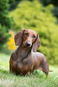 DOG 14 LS0021 01