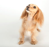 DOG 14 MR0002 01