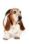 DOG 14 MR0005 01