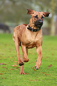 DOG 14 NR0018 01